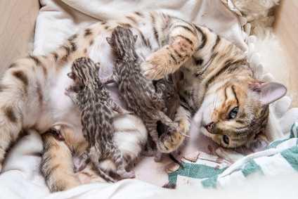 Gestazione gatti: quanto dura la gravidanza di un gatto e cosa fare