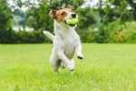 Giochi con i cani: come insegnare al cane a giocare con la pallina