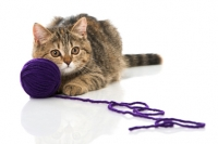 Gioco del gatto: giochi per gatti fai da te e idee per farlo giocare