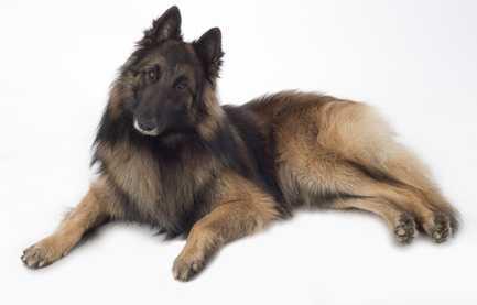 Giusta percentuale di proteine per cane sensibile