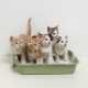 Guida alla scelta della migliore lettiera per gatti
