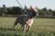 I problemi di parto per il bulldog, esempio pratico