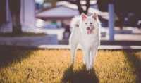 Il diabete nel cane, sintomi e cure