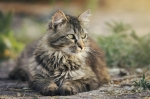 Inserita la nuova linea di crocchette Exclusion gatto sia mantenimento che sterilizzati