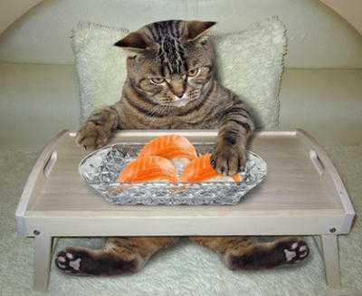 Insufficienza renale del gatto, cosa fare? Esempio pratico