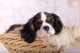 Intolleranza alimentare cane, consiglio alimentazione