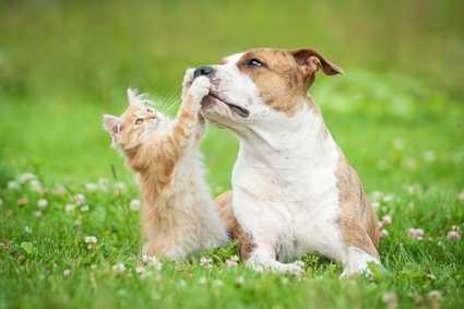 La convivenza fra cane e gatto, consigli utili