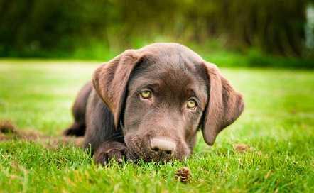 La Pica: come educare un cane a non mangiare tutto da terra!