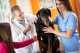 La piometra del cane, cosa è, cause e rimedi. Esempio pratico