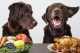 La sensibilità alimentare del cane e le soluzioni sensitive proposte da Prolife