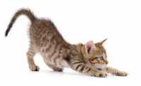 L'alimentazione carnivora del gatto e le crocchette Oasy
