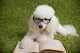 L'alimentazione del cane di piccola taglia, dal cucciolo all'età adulta