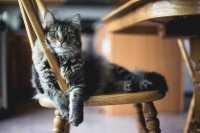 L'alimentazione del gatto dalla nascita all'età adulta