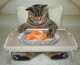 L'alimentazione del gatto secondo Brit Care per proteggere l'organismo dalle influenze ambientali negative