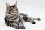 L'alimentazione del gatto secondo Carnilove