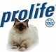 L'alimentazione del gatto secondo Prolife