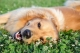 L'alimentazione Grain Free del cane e le crocchette Prolife