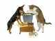 L'alimentazione ideale per i gatti nelle varie fasi della loro vita