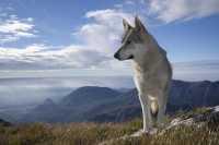 Le crocchette per cane Brit Care, in difesa del sistema immunitario