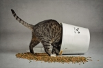 Le nuove crocchette per gatti Acana ed Orijen, ricche di carne e prive di cereali