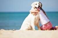 L'insufficienza renale del cane, esempio pratico