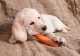 L'intolleranza alimentare nel cane, sintomi e cura. La dieta ad esclusione