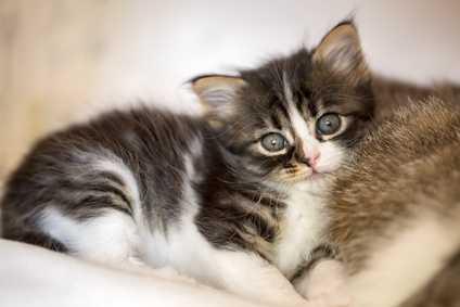 Mamma gatta senza più gattini ma con latte
