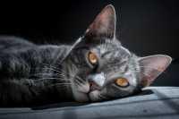 Morte improvvisa di un gatto, da cosa può dipendere?