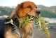 Novità per il cibo umido per cani Dalla Grana Pura Natura