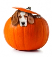 Parassiti del cane, gli ascaridi in un cucciolo cosa fare? Esempio pratico