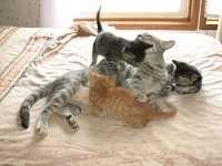 Perchè i gatti fanno la pasta: curiosità sui gatti