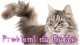 Pet Shop Store ti offre un nuovissimo servizio di consulenza sul comportamento del gatto