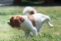 Problema bisogni sulla traversa per cane 10 mesi