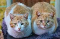 Problema con due gatti