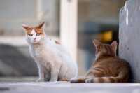Problema convivenza tra gatti