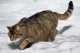 Problemi di socialità fra un gatto casalingo e gatti randagi con relativi pericoli da stress