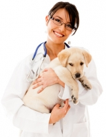 Quale alimentazione per cane con ernia iatale?