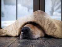 Raffreddore cane: come curare il raffreddore al cane