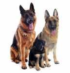 Ripetizione dei vaccini nei cani, è corretto?