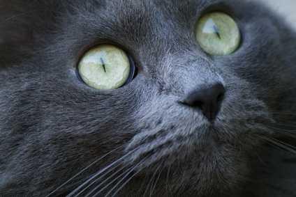 Rottura corneale interna per un gatto, cosa fare?