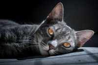 Schesir le nuove crocchette per gatti sia mantenimento che sterilizzati