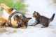 Snack per Cani e Gatti Fai la Scorta ora