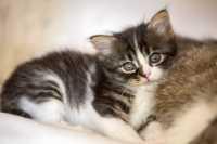 Sterilizzazione del gatto, aspetti positivi e negativi