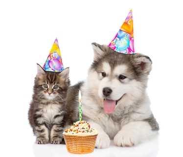 Tutto cuccioli Carnilove Puppy per cani e Kitten gatti