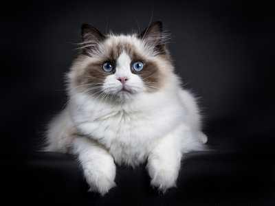 Tutto quello che devi sapere sull'alimentazione del gatto adulto